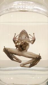 museum frog 2
